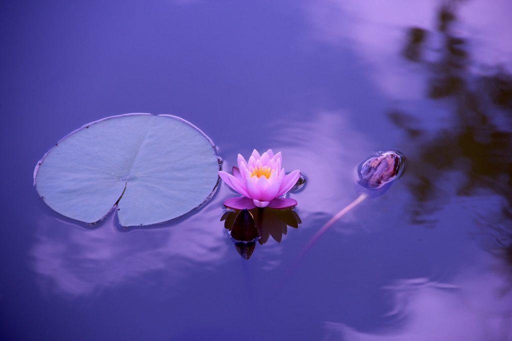 Meditation Inspiration!